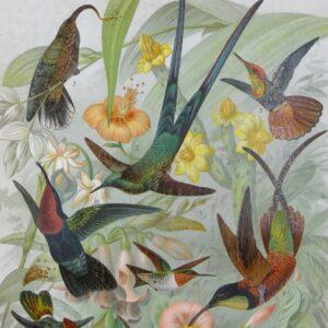 oryginalna litografia